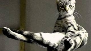 Nooncat - Factum