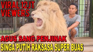 Download lagu THE LION WHISPERER FROM INDONESIA - AGUS SANG PENAKLUK SINGA PUTIH RAKSASA YANG BUAS