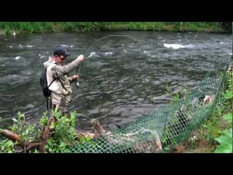 Russian River Alaska Sockeye