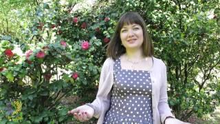 Как начать получать дары от жизни (видео-уроки от Ирины Стояновской)