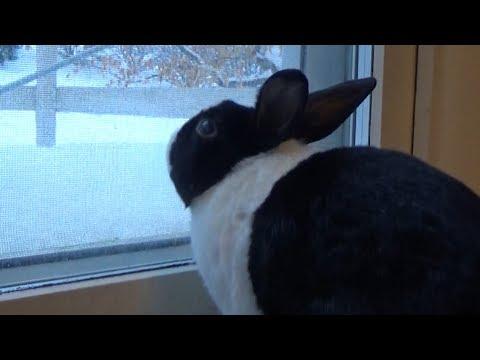 Cheering up a sad rabbit!