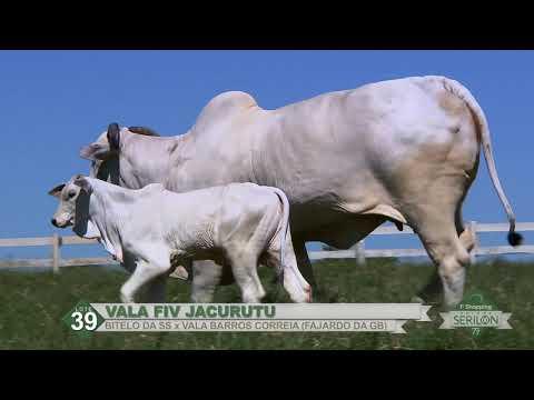 Lote 39   Vala FIV Jacurutu   (RMMN 281)