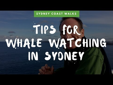 Tips For Whale Watching Season Sydney (2018 Edit)