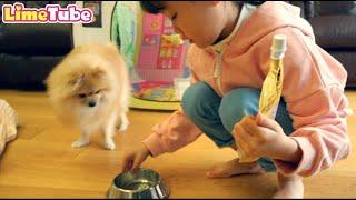 [30분] 라임의 키즈카페 인기영상 모음 indoor playground family fun | LimeTube toy review