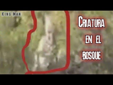 Mientras rescataban lobo por error graban una extraña criatura