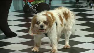 Today Show Adopt Don't Shop with Nanci Creedon Dog Behaviourist