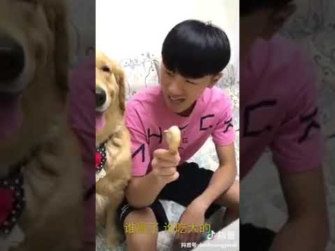 Dog Series: When you play paper, scissors and rock with your dog and you lose