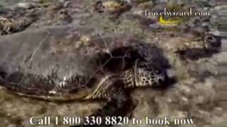 Heron Island Travel Video: Heron Island Videos