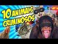 10 ANIMAIS QUE COMETERAM CRIMES - Mundo Bizarro