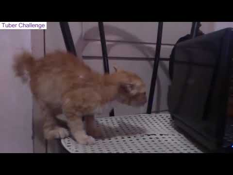 Best Scared Cats Video Compilation 2019 - Funny Scared Cats Jumping If you laugh you lose - Tuber