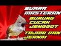 Suara Burung Cucak Jenggot Cocok Untuk Masteran Kacer Murai Batu Cucak Ijo  Mp3 - Mp4 Download