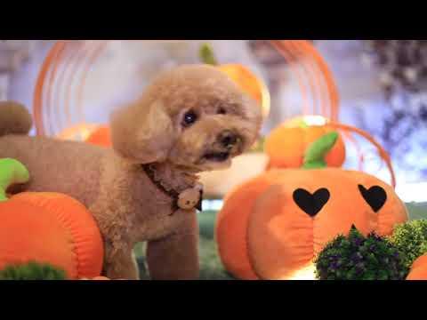 Halloween Day 2 @Ada Chan