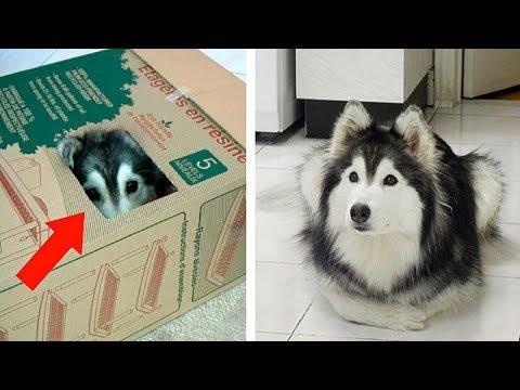 Вопрос: Какой породы пёс в рекламе Магне в6 А собака откуда?
