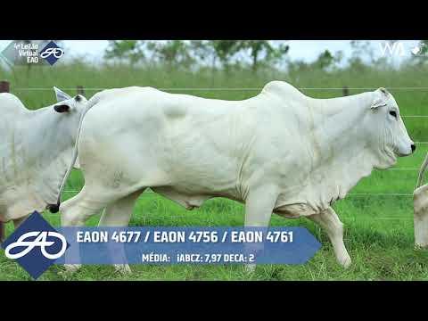 LOTE 47   EAON 4761, 4756, 4677