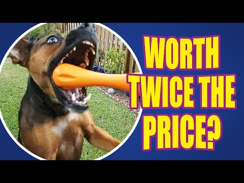 Best Fetch AND Chew Toy? -  DOG TOY REVIEWS - West Paw Hurley Dog Bone