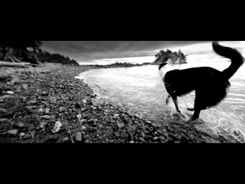 Обзор корма GO! Sensitivity + Shine Salmon Dog Recipe - YouTube