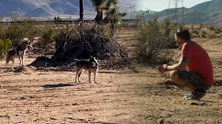 Trying To Save Two Huskies Stranded In The Desert | Brandon McMillan