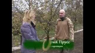 Дрессировка мареммы. Отрывок ТВ-программы. http://dogclass.ru/