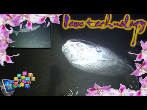 WHAT DO WE KNOW ABOUT THE LIVES OF GREENLAND SHARKS?  - News Techcology