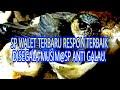 Sp Respon Terbaik Disegala Musim Sp Anti Galau  Mp3 - Mp4 Download