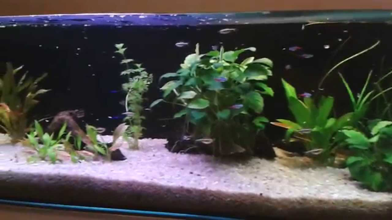 120 liters aquarium and fish feeding