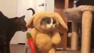 Cute Cat In Rabbit Costume Funny Musically Whatsapp Status Video TikTok