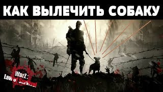 WarZ Law of Survival - КАК ВЫЛЕЧИТЬ СОБАКУ | by Boroda Game