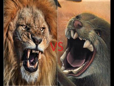 African Lion vs Marsupial Lion