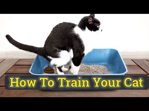 How to Train a Cat to use Litter box hindi/urdu 2019 | Cat toilet Training