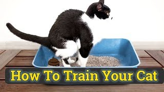 How To Train A Cat To Use Litter Box Hindiurdu 2019  Cat Toilet Training