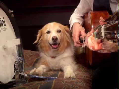Play Guitar With Dog - Take a Walk by Passion Pit