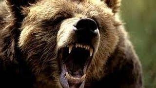 Смотреть всем! Долина Гризли поле битвы. Документальный фильм про медведей гризли