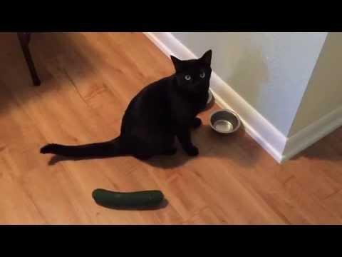 Смешные животные Кошки против собак