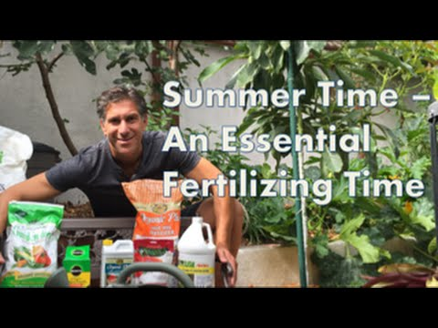 Summer Time -- An Essential Fertilizing Time! Organic vs. Chemical Fertilizer