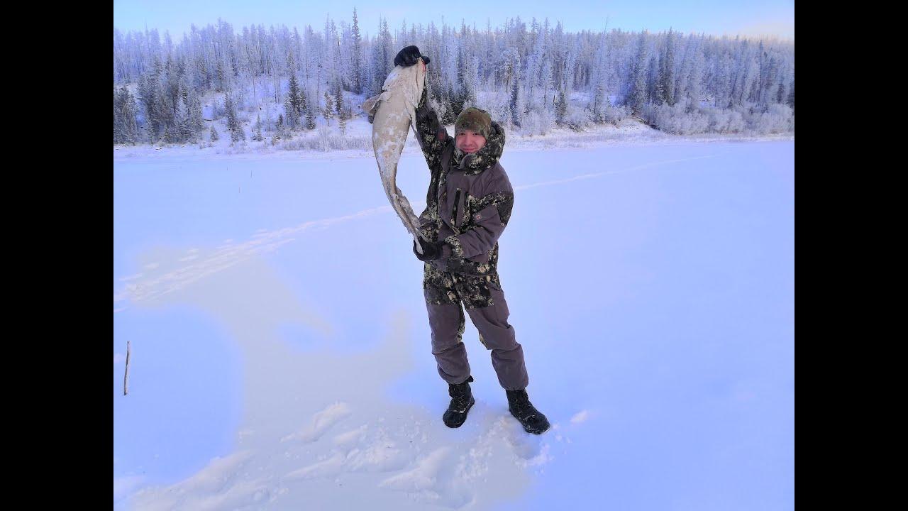 Вытащили налима на 6 кг. Зимняя подледная рыбалка на налима