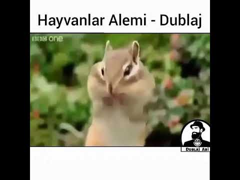 Hayvanlar alemi dublaj 🐱🐶🐤