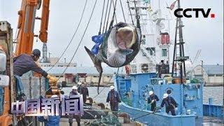 [中国新闻] 日本7月1日重启商业捕鲸活动 | CCTV中文国际