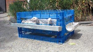 Клетка для перепелов бесплатно, за 35 минут. cell for quail(Клетка для перепелов сделанная своими руками это не очень сложно и это в разы экономнее, чем покупная переп..., 2014-08-18T14:54:00.000Z)