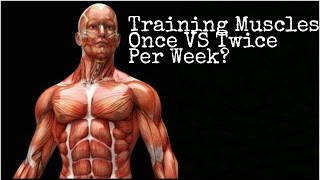 How many Times in a Week Should you Train Each Muscle?   Simple Answer