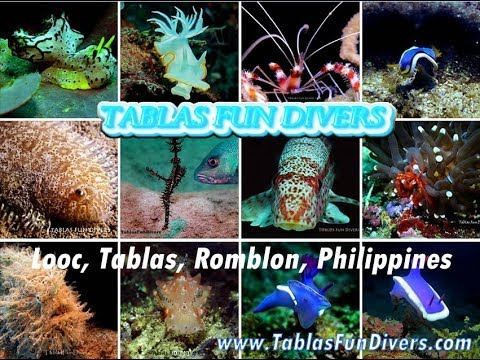 Best scuba dive sites at Romblon province