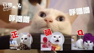 【豆漿 - SoybeanMilk】這年頭連貓都不可信 慎防網路詐騙