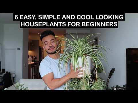 EASY HOUSE PLANTS FOR BEGINNERS