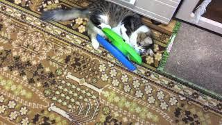 После кастрации кота.гоняет шарик и счастлив.