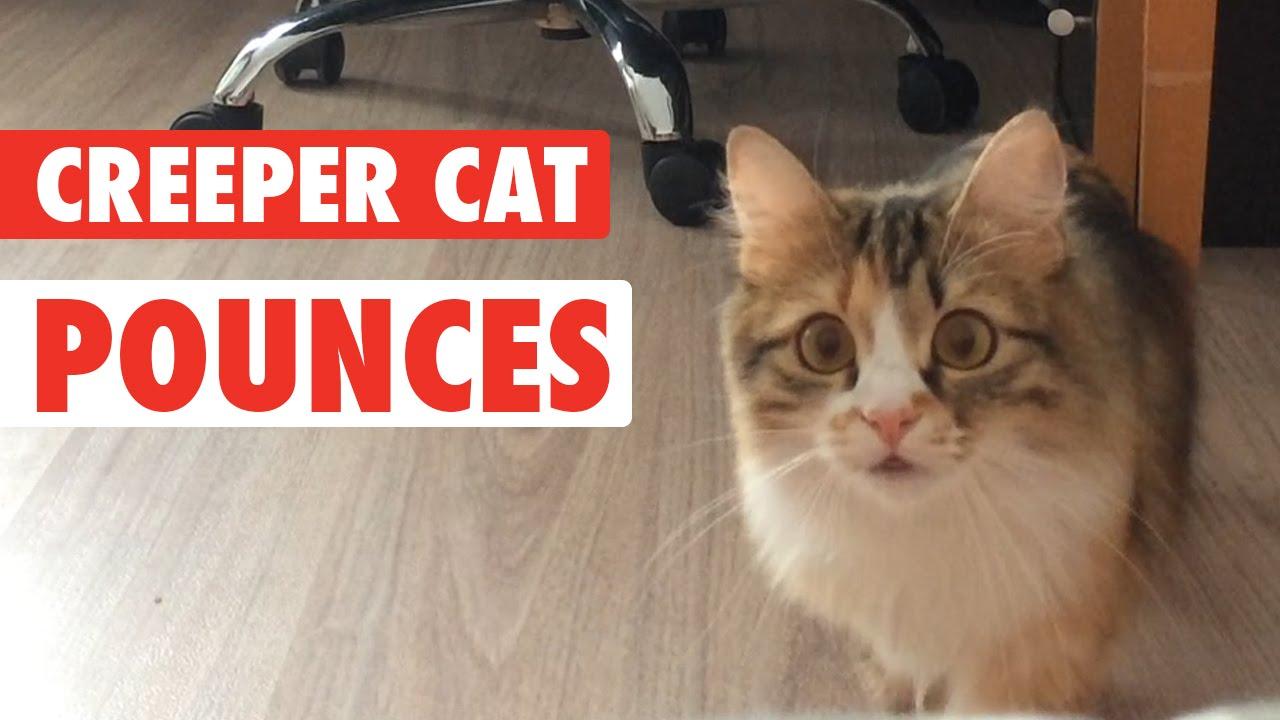 Kitty Cat Creeper || Cat Creeps to Camera
