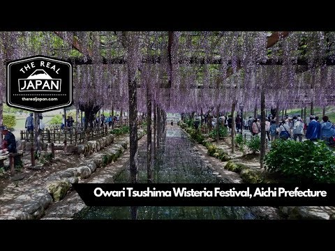 Owari Tsushima Wisteria Festival, Tennogawa Park, Aichi Prefecture | The Real Japan | HD