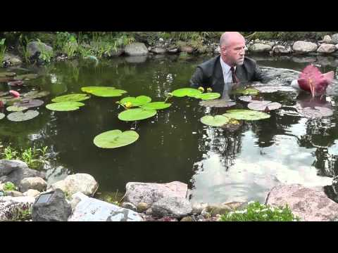 How to plant water lilies in a deep pond ?