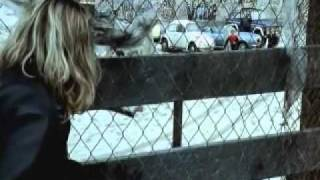 Locals Only - Lords of Dogtown