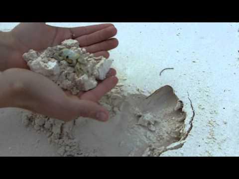 jake picking up ghost crab