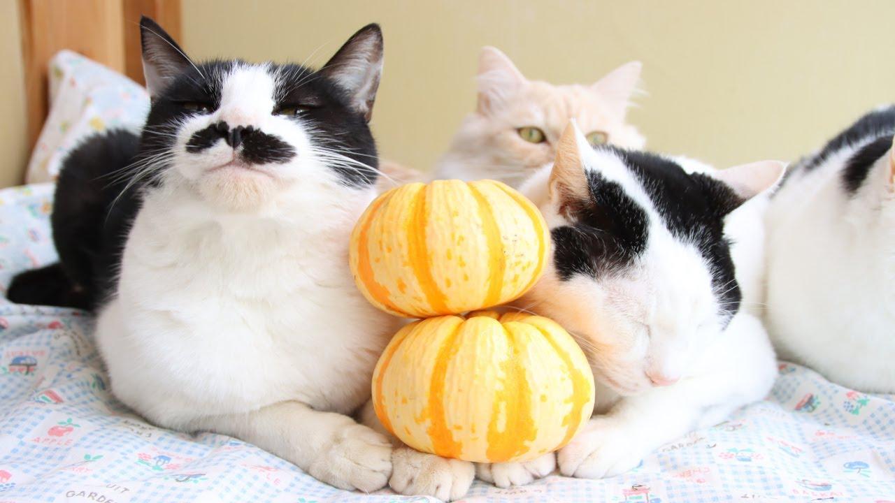プッチーニかぼちゃのせ猫 201126