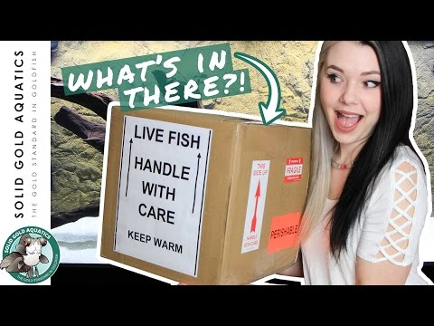 Thumbnail: Unboxing My New MYSTERY FISH!